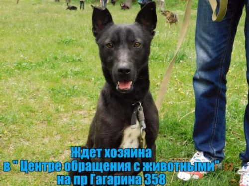 496545570_5_644x461_umnye-i-krasivye-v-horoshie-ruki-harkovskaya-oblast[1]