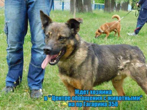 496545570_8_644x461_umnye-i-krasivye-v-horoshie-ruki-[1]